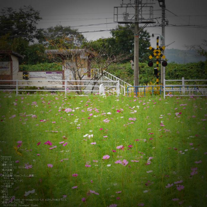 伊賀鉄道,コスモス_2013yaotomi_10s.jpg