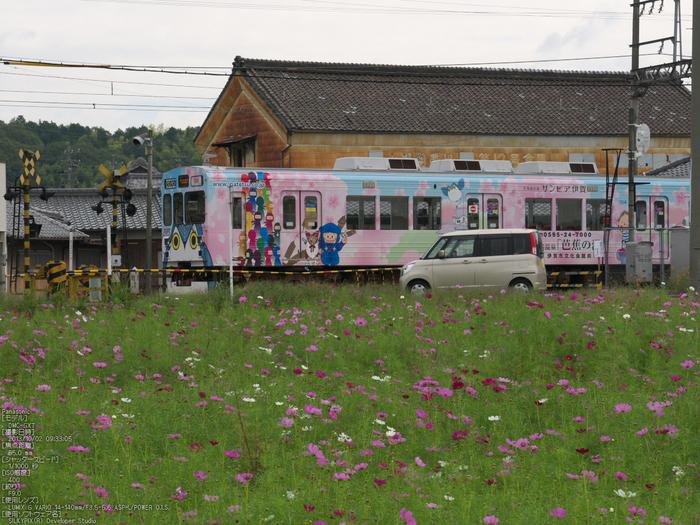 伊賀鉄道,コスモス_2013yaotomi_3s.jpg