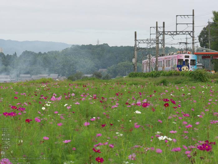 伊賀鉄道,コスモス_2013yaotomi_5s.jpg