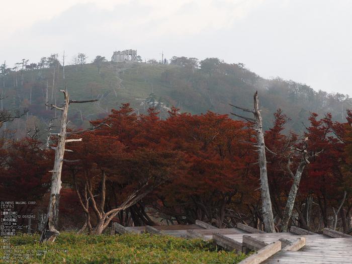 大台ケ原,紅葉_2013yaotomi_OMD,EM1_10s.jpg