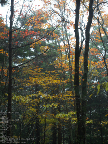 大台ケ原,紅葉_2013yaotomi_OMD,EM1_b15.jpg
