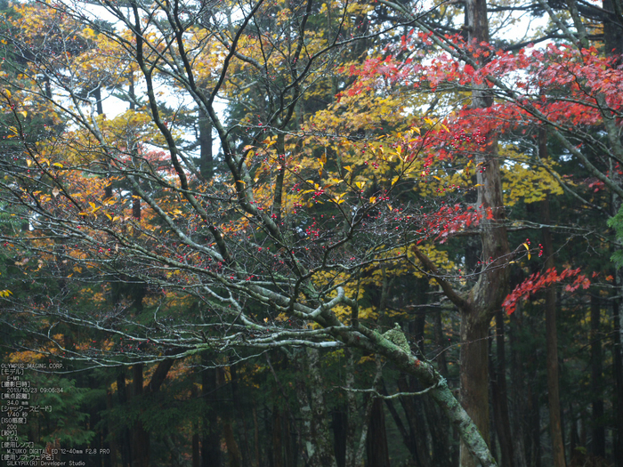 大台ケ原,紅葉_2013yaotomi_OMD,EM1_b22.jpg