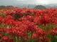 葛城古道,九品寺_PanasonicGX7_2013yaotomi_11full.jpg