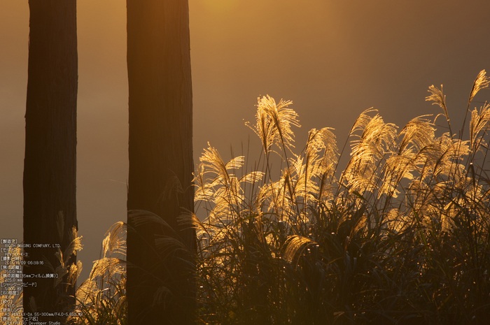 曽爾,屏風岩公苑,紅葉(PENTAX-K3)_2013yaotomi_12s.jpg