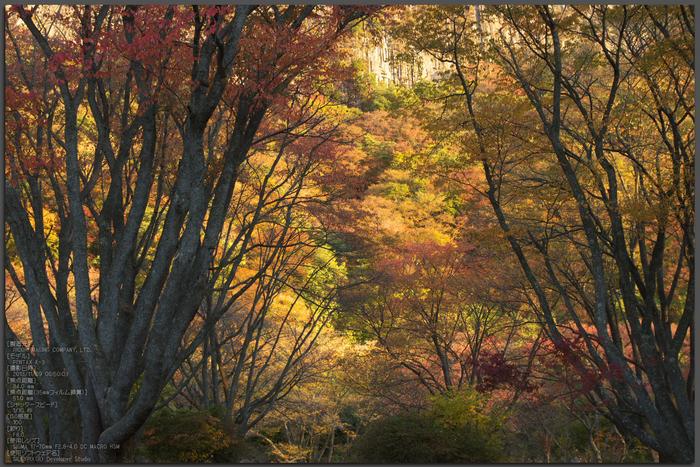 曽爾,屏風岩公苑,紅葉(PENTAX-K3)_2013yaotomi_21s.jpg
