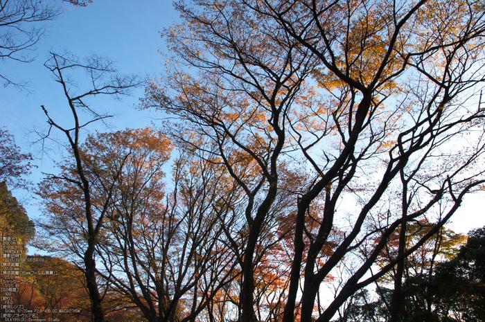 曽爾,屏風岩公苑,紅葉(PENTAX-K3)_2013yaotomi_22s.jpg