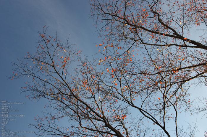 曽爾,屏風岩公苑,紅葉(PENTAX-K3)_2013yaotomi_26s.jpg