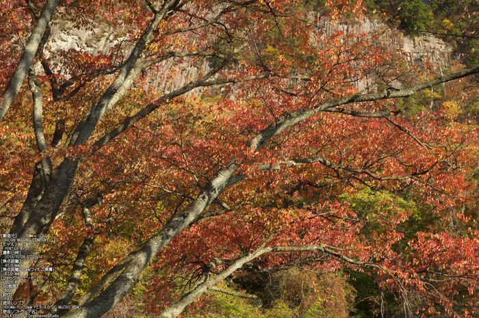 曽爾,屏風岩公苑,紅葉(PENTAX-K3)_2013yaotomi_28s.jpg