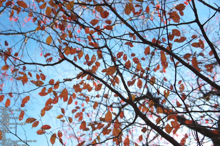 曽爾,屏風岩公苑,紅葉(PENTAX-K3)_2013yaotomi_30s.jpg
