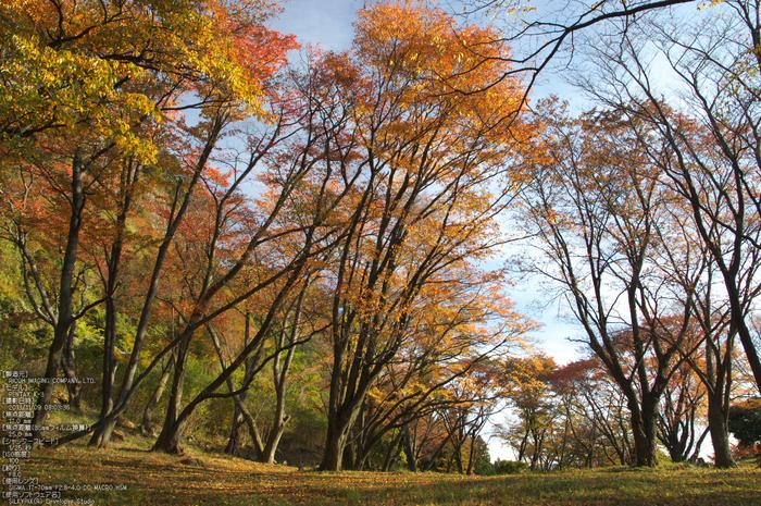 曽爾,屏風岩公苑,紅葉(PENTAX-K3)_2013yaotomi_37s.jpg