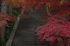 比叡山延暦寺,紅葉(PENTAX-K3)_2013yaotomi_1full.jpg