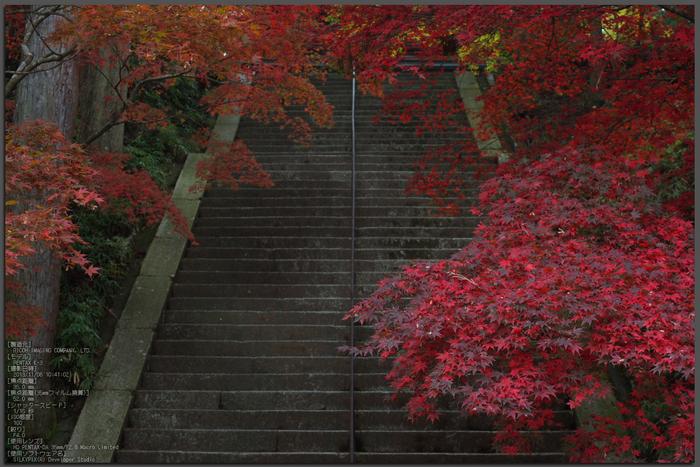 比叡山延暦寺,紅葉(PENTAX-K3)_2013yaotomi_1st.jpg