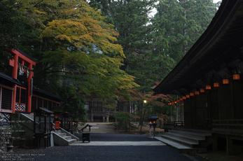 高野山,紅葉(PENTAX-K3)_2013yaotomi_10s.jpg