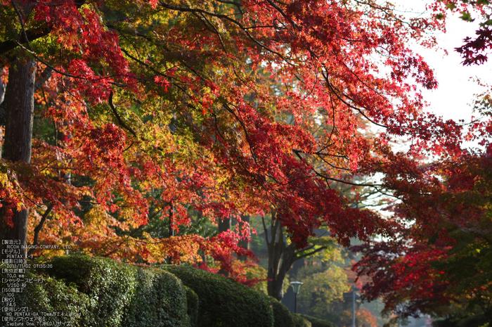 高野山,紅葉(PENTAX-K3)_2013yaotomi_21s.jpg