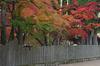 高野山,紅葉(PENTAX-K3)_2013yaotomi_27full.jpg
