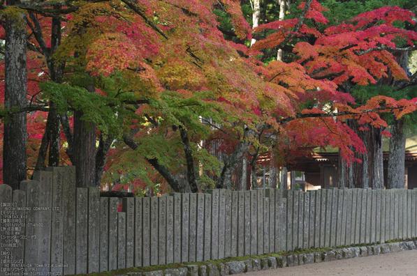 高野山,紅葉(PENTAX-K3)_2013yaotomi_27s.jpg