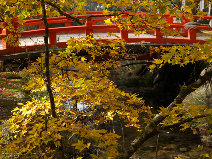 高野山,紅葉(Panasonic,GX7)_2013yaotomi_10s.jpg