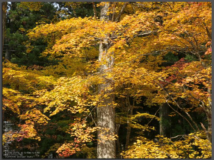 高野山,紅葉(Panasonic,GX7)_2013yaotomi_1st.jpg