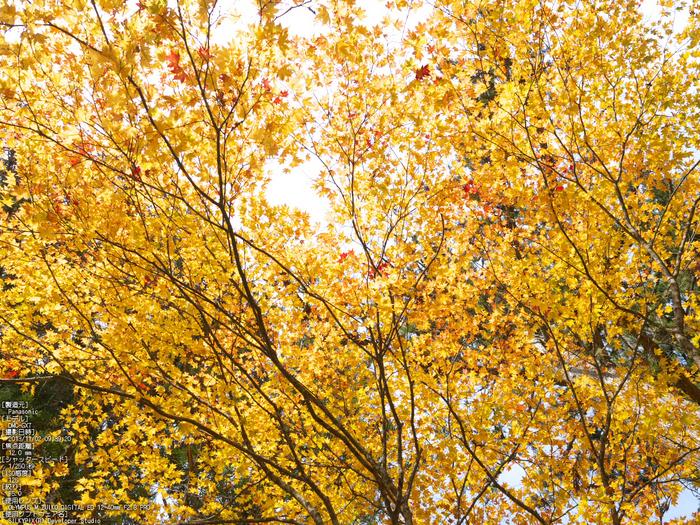高野山,紅葉(Panasonic,GX7)_2013yaotomi_20s.jpg