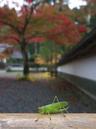 高野山,紅葉(Panasonic,GX7)_2013yaotomi_27s.jpg