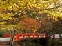 高野山,紅葉(Panasonic,GX7)_2013yaotomi_6full.jpg