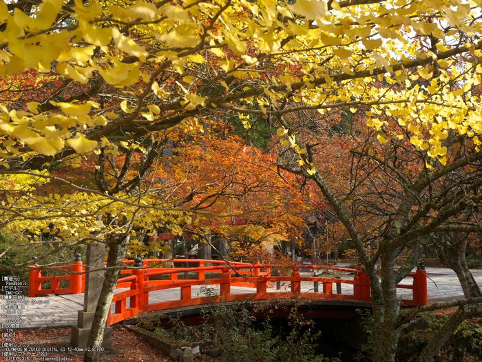高野山,紅葉(Panasonic,GX7)_2013yaotomi_6s.jpg