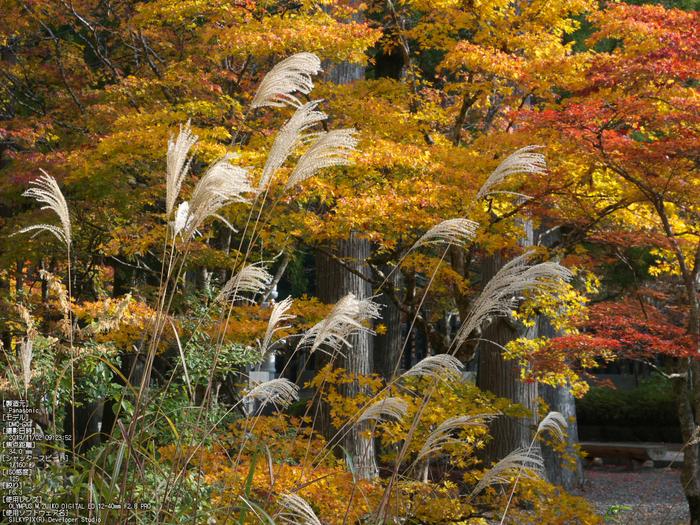 高野山,紅葉(Panasonic,GX7)_2013yaotomi_7s.jpg