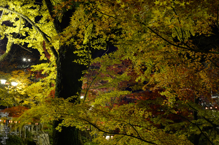 Nikon,Df_Ai_朝護孫子寺・紅葉_2013yaotomi_12s.jpg
