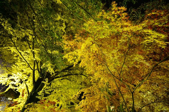 Nikon,Df_Ai_朝護孫子寺・紅葉_2013yaotomi_13s.jpg