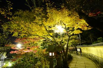 Nikon,Df_Ai_朝護孫子寺・紅葉_2013yaotomi_18s.jpg