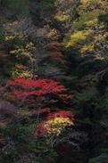 天川,天ノ川渓谷,紅葉(PENTAX-K3)_2013yaotomi_60full.jpg