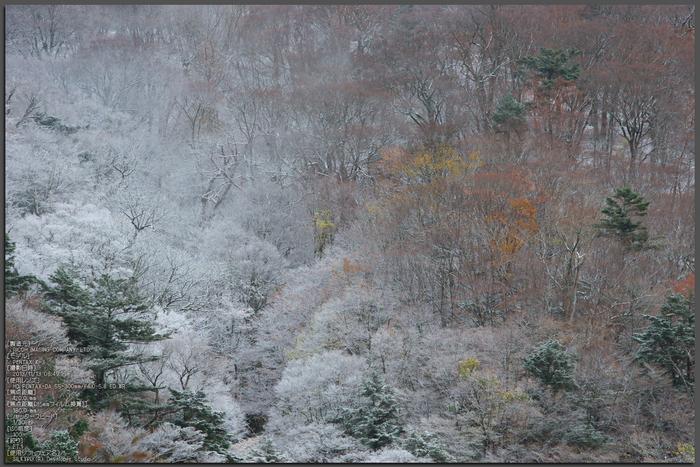天川,行者還,紅葉(PENTAX-K3)_2013yaotomi_51st.jpg