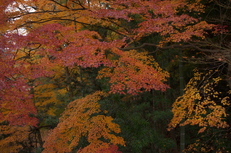 PK3_5112_SIL(29mm・F3,5・FULL),奈良公園紅葉2013yaotomi_.jpg