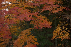 PK3_5113_SIL(29mm・F4,0・FULL),奈良公園紅葉2013yaotomi_.jpg