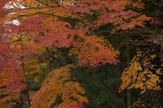 PK3_5115_SIL(29mm・F5,0・FULL),奈良公園紅葉2013yaotomi_.jpg
