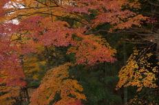 PK3_5119_SIL(29mm・F6,3・FULL),奈良公園紅葉2013yaotomi_.jpg
