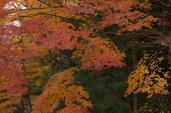 PK3_5123_SIL(29mm・F10・FULL),奈良公園紅葉2013yaotomi_.jpg