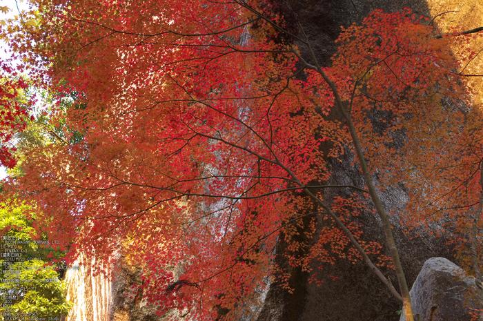 P_K33534_SIL(45mm,F5,6),笠置寺,紅葉,2013yaotomi_.jpg