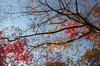 P_K33663_SIL(35mm,F2,2,iso100,FULL)_2013yaotomi_.jpg