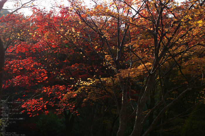 P_K33671_SIL(35mm,F5,6),笠置寺,紅葉,2013yaotomi_.jpg