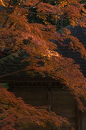 P_K33903_SIL(70mm,F5,6,FULL)室生寺紅葉,2013yaotomi.jpg