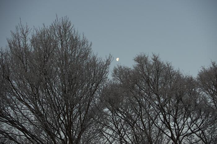 三尾,西明寺_PENTAX,K3(40mm,F6,3)PK3_5553_2014yaotomi_.jpg