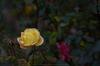 大和七福八宝めぐり,おふさ観音,2014_DSC_6477Cap(F3.5,NIKKOR58,1,4G,D800E,FULL)2014yaotomi.jpg