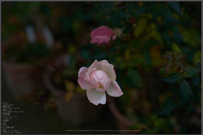大和七福八宝めぐり,おふさ観音,2014_DSC_6484Cap(F4.5,AF-S,NIKKOR58,1,4G,D800E)2014yaotomi_top.jpg