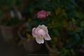大和七福八宝めぐり,おふさ観音,2014_DSC_6484Cap(F4.5,NIKKOR58,1,4G,D800E,FULL)2014yaotomi.jpg