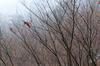 大和七福八宝めぐり,長谷寺_DSCF0229(Cap,XQ1,FULL)2014yaotomi.jpg