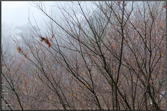 大和七福八宝めぐり,長谷寺_DSCF0229_2014yaotomi_Top.jpg