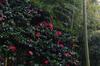 大和七福八宝めぐり,長谷寺_DSCF0249(Cap,XQ1,FULL)2014yaotomi.jpg