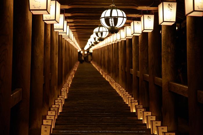 長谷寺,観音万燈会_IMG_4813Cap(105mm,F4.5,iso1600,SIGMA24_105,5DmarkII)2013yaotomi.jpg