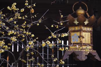 北野天満宮,梅(OMD_EM10,09-25-30,42mm,F7.1,iso200)2014yaotomi_.jpg
